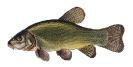 Naše druhy ryb_1