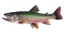 Naše druhy ryb
