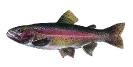 Naše druhy ryb_30