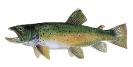Naše druhy ryb_58